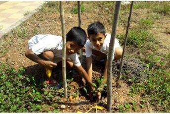 Tree Plantation By Balvikas Children